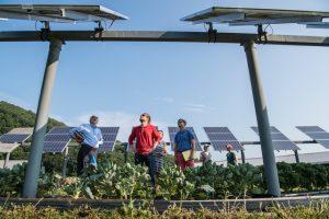 7 Career Pathways in Renewable Energy